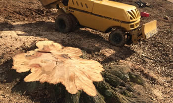 Stump Removal in Oklahoma City OK Stump Removal Services in Oklahoma City OK Stump Removal Professionals Oklahoma City OK Tree Services in Oklahoma City OK