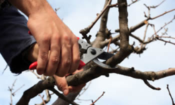 Tree Pruning in Oklahoma City OK Tree Pruning Services in Oklahoma City OK Quality Tree Pruning in Oklahoma City OK
