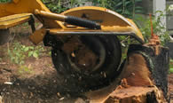 Stump Removal in Oklahoma City OK