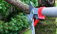 Tree Pruning Services in Oklahoma City OK