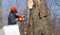 Tree Removal in Oklahoma City OK